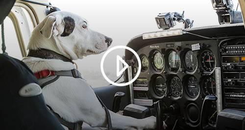 Los perros pueden volar, en #0