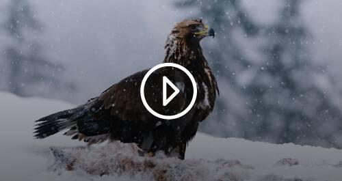 BBC Earth - Planeta Tierra II. Episodio 2: Montañas