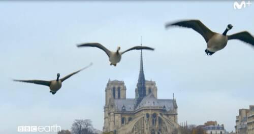 BBC Earth: París salvaje