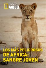 Los más peligrosos de África: sangre joven
