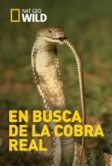 En busca de la cobra real