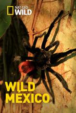 Wild México