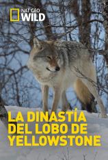 La dinastía del lobo de Yellowstone