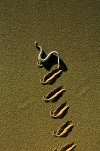 Paraísos terrenales. T1.  Episodio 2: El desierto de Namib: el edén africano