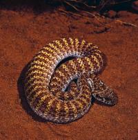 Los animales más peligrosos del mundo. T2.  Episodio 4: El Amazonas