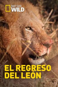 El regreso del león