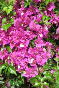 La Andalucía secreta de las plantas. La Andalucía secreta de las plantas