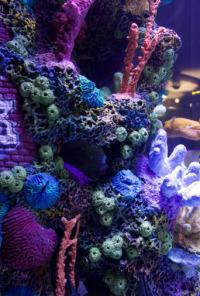Acuarios XXL. T6.  Episodio 6: El acuario real de Prince Royce