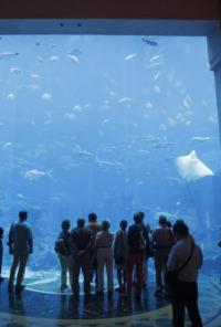 Acuarios XXL. T7.  Episodio 11: El acuario de los San Francisco Giants