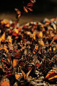 Migraciones salvajes. T1.  Episodio 6: Ejército de hormigas