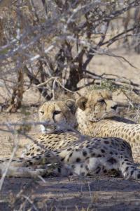 África, entre garras y mandíbulas. T1.  Episodio 1: La amenaza del depredador