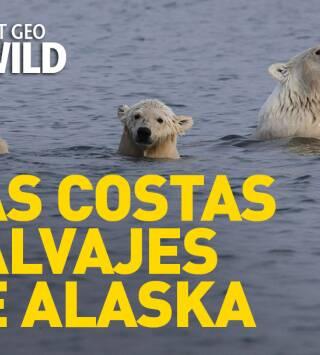 Episodio 20: Las costas salvajes de Alaska