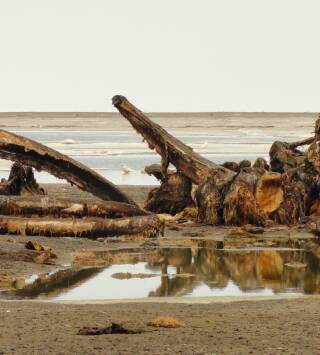 Episodio 264: Alaska salvaje