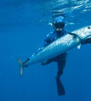 El tiburón contra el atún