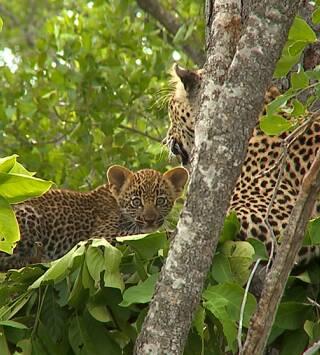 El reino del leopardo