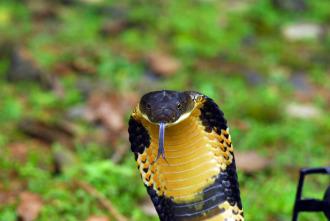 Los animales más peligrosos del mundo 3