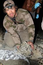 El leopardo de las nieves de Afganistán