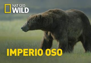 Imperio oso