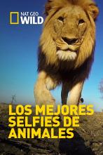 Los mejores selfies de animales