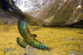 Nueva Zelanda salvaje - Extremos salvajes