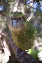 Nueva Zelanda salvaje - Recién llegados