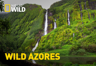 Wild Azores