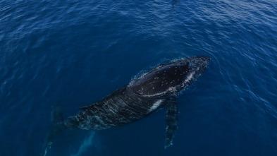 La encantadora de ballenas