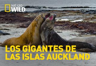 Los gigantes de las islas Auckland
