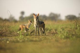 Los depredadores más letales de África 4: Botsuana