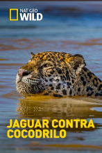 Jaguar contra cocodrilo