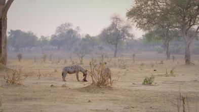 Cazadores de África