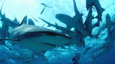 Buceando con tiburones