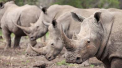 Wild Sudáfrica - Asesinos del Kalahari