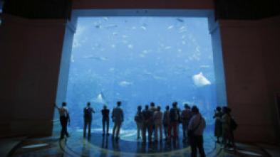 Acuarios XXL - El acuario para serpientes de Dwight Howard