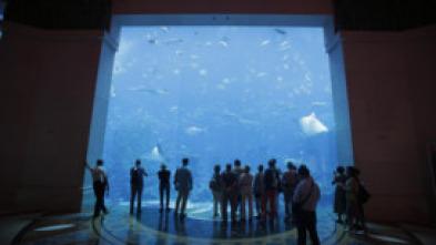 Acuarios XXL - Una siesta entre los peces