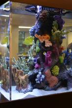 Acuarios XXL - Cenando con los peces
