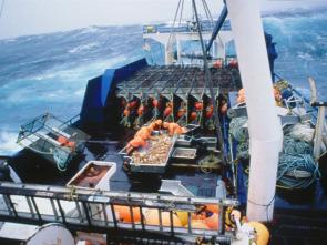 Pesca radical - Envenenados en el mar
