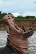 Los depredadores más letales de África - Ataques felinos