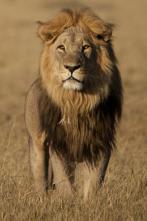 Savage Kingdom - Gana o muere
