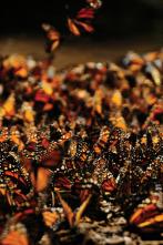 Migraciones salvajes - Ejército de hormigas