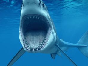 Los tiburones más peligrosos del mundo