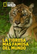 La tigresa más famosa del mundo
