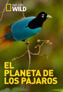 El planeta de los pájaros