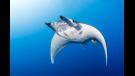 Curiosidades marinas de 'Planeta Azul II'