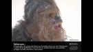Chewbacca, sonido, animales, osos, focas, tejón, morsa