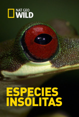 Especies insólitas