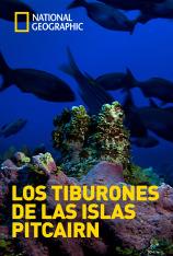 Los tiburones de las islas Pitcairn