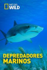 Depredadores marinos