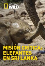 Misión crítica: Elefantes en Sri Lanka