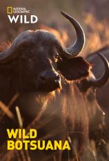 Wild Botsuana